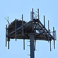 Massaive Nesting by Art Dingo