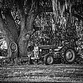 Massey Ferguson - Shade Tree by Scott Hansen