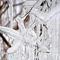 Massive Icicles by Staci Bigelow
