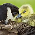 Maternal Love by Mircea Costina Photography