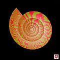 Math Conch by GuoJun Pan