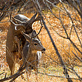 Mating Mulies by Jim Garrison