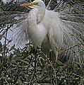 Mating Plumage by Deborah Benoit