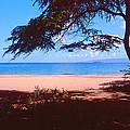 Maui Beach by Dena Baker