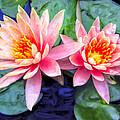 Maui Lotus Blossoms by Dominic Piperata