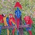 Maui Macaws by Rhonda Leonard