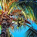 Maui Palm by Lars Lentz