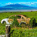 Maui Upcountry Rusted Car by Roy Bendell