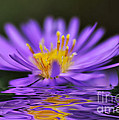 Mauve Softness And Reflections by Kaye Menner