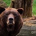 Max The Brown Bear by Mickey At Rawshutterbug