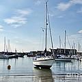 May Morning - Lyme Regis 2 by Susie Peek