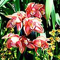 Joy Orchids by William Dey