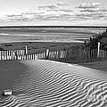 Mayflower Beach Black And White by Amazing Jules