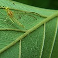 Mayfly by Rory Cubel