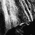Mccloud River Falls by Donna Blackhall