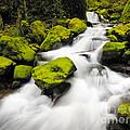 Mccord Creek, Columbia Gorge by John Shaw