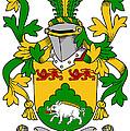 Mcdonogh Coat Of Arms Irish by Heraldry
