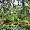 Mckee Botanical Gardens by Carol Montoya