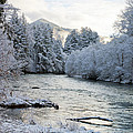 Mckenzie River by Belinda Greb