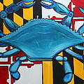 Md Blue Crab by Kate Fortin