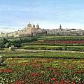 Mdina Poppies Malta by Richard Harpum