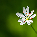 Meadow Candy - Featured 3 by Alexander Senin