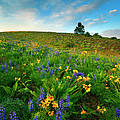 Meadow Gold by Mike  Dawson