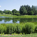 Meadow Lake by Verana Stark