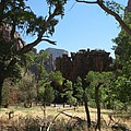 Meadow Zion Park by Christiane Schulze Art And Photography