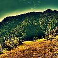Meadows 2 by Salman Ravish