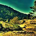 Meadows by Salman Ravish