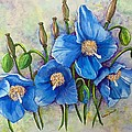 Meconopsis    Himalayan Blue Poppy by Karin  Dawn Kelshall- Best
