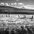 Medicine Springs Fenceline by Paul Haist
