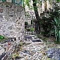 Medieval Garden by Elvis Vaughn
