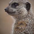 Meerkat 9 by Ernie Echols