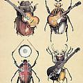 Meet The Beetles by Eric Fan