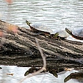 Meeting On The Log by Bonfire Photography