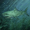 Megadolon Shark by Tom Shropshire