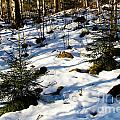 Melting Snow In A Forest In Late Winter by Kerstin Ivarsson