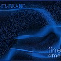 Membrane 2 by Joan-Violet Stretch