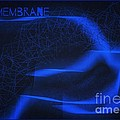 Membrane 3 by Joan-Violet Stretch