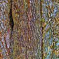 Menage A Tree by Gary Holmes