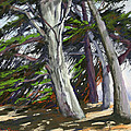 Mendocino Cypress by Patricia Rose Ford