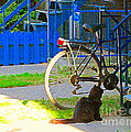 Meow Cat In Verdun Waiting By The Step Beautiful Summer Montreal Pet Lovers City Scene C Spandau by Carole Spandau