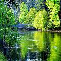 Merced River Sentinel Bridge Green Trees Reflected by Jeff Lowe