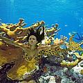 Mermaid Camoflauge by Paula Porterfield-Izzo