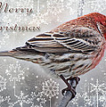 Merry Christman Finch Greeting Card by Debbie Portwood