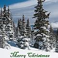 Merry Christmas - Winter Trees And Rising Clouds by Cascade Colors