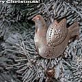Merry Christmas 1 by Tam Ryan