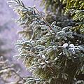 Merry Christmas 5 by Alexander Senin